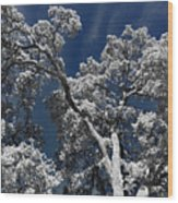 Trapped In Ice Wood Print