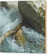 Trapped River Log Wood Print