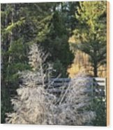 Travertine Tree Wood Print