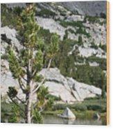 Treasure Lake Pine Wood Print