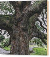 Treaty Oak 12 14 2015 024 Wood Print