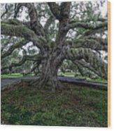 Treaty Oak 12 14 2015 028 Wood Print