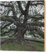 Treaty Oak 12 14 2015 029 Wood Print