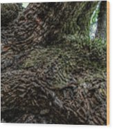 Treaty Oak 12 14 2015 042 Wood Print