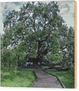 Treaty Oak 12-14-2015 048 Wood Print