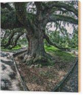 Treaty Oak 12-14-2015 056 Wood Print