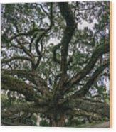Treaty Oak 12-15-2015 051 Wood Print