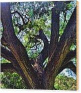 Tree 105 Wood Print