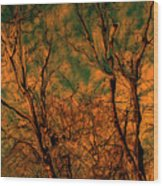 Tree Abstract Wood Print
