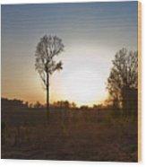 Tree Against The Sun II Wood Print