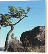 Tree And Rock Wood Print