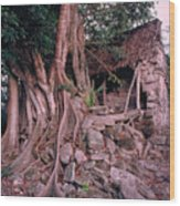 Tree And Ruins In Cozumel Wood Print