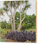 Tree And Succulents In Huntington Desert Gardens In San Marino-california Wood Print