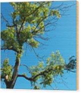 Tree Art 1 Wood Print