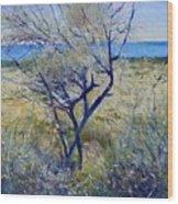 Tree At Aseeb Oman 2002 Wood Print
