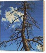 Tree At Bryce Canyon Utah. Wood Print