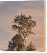 Tree At Dusk On Suomenlinna Island Wood Print