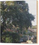 Tree At Mission Carmel Wood Print