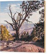 Tree At Moran Point Wood Print