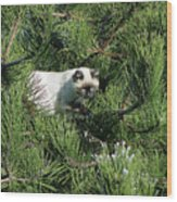 Tree Bandit Wood Print