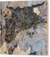 Tree Barks Pattern #13 Wood Print