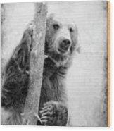 Tree Bear Wood Print