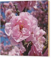 Tree Blossoming Pink Spring Blue Sky Baslee Troutman Wood Print
