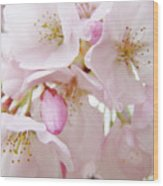 Tree Blossoms Art Prints Canvas Pink Spring Blossoms Baslee Troutman Wood Print