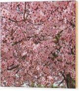 Tree Blossoms Pink Blossoms Art Prints Giclee Flower Landscape Artwork Wood Print