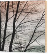 Tree Branches  Wood Print
