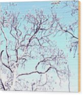 Tree Branches Reaching For Heaven 2 Wood Print