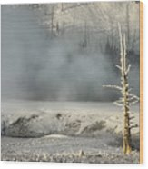 Tree By The Thermal - Yellowstone Wood Print