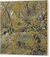 Tree By The Water Wood Print