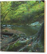 Tree By Water Wood Print