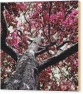 Tree Canopy Red Wood Print