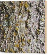 Tree Trunk Detail Wood Print