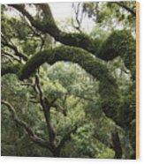 Tree Drama Wood Print