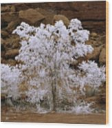 Tree During Winter Inversion Wood Print