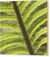 Tree Fern Frond Wood Print