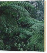 Tree Ferns Wood Print