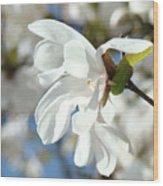 Tree Floral Garden White Magnolia Wood Print