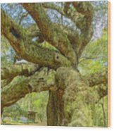 Tree For The Ages Wood Print