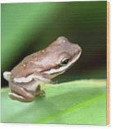 Tree Frog Close-up 01110 Wood Print