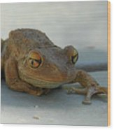 Tree Frog Out For A Walk Wood Print