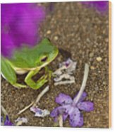 Tree Frog Under Flower Wood Print