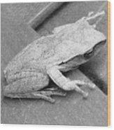 Tree Frog Up Late Wood Print