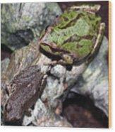 Tree Frogs Wood Print