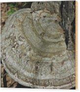 Tree Fungi Wood Print