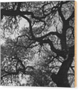 Tree Gazing Wood Print
