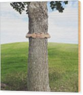 Tree Hugger 3 Wood Print